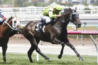 Lucques fights hard for Flemington success
