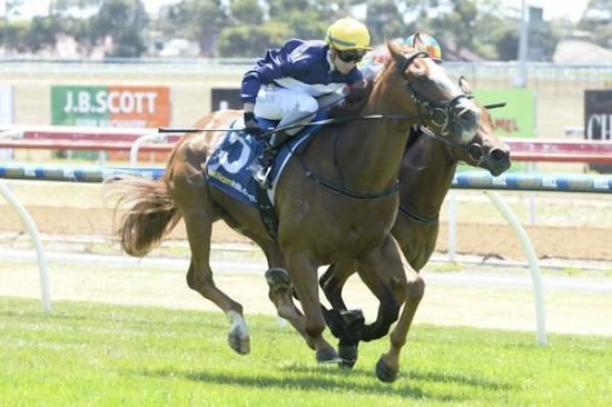 Sir Sagamore gets the money at Geelong