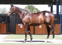 Ellerton Zahra Racing stocks up at Inglis Melbourne Premier sale