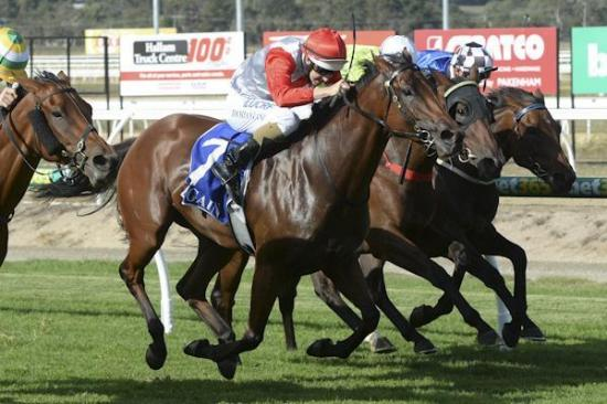 Photo finally goes Campanula's way at Pakenham