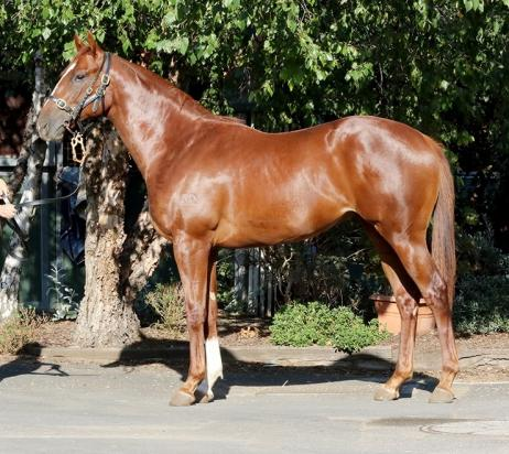 Stable Breakfast & Yearling Parade on Saturday