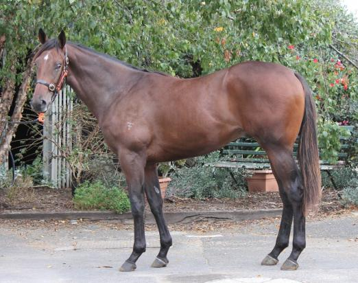 His sire a Cox Plate winner & dam an Oaks winner - introducing our new Easter yearling