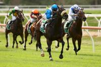 Robert de Werribee hero after maiden win
