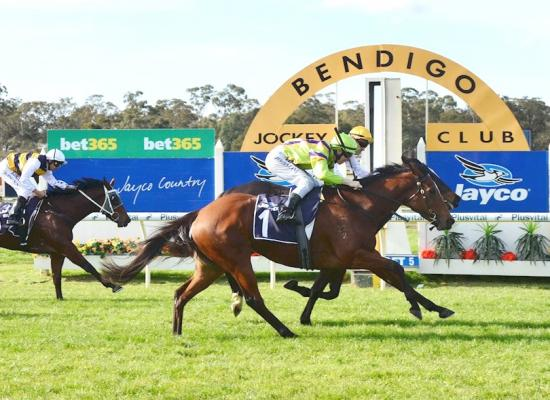 Blithe Belle shares the prize at Bendigo