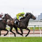 Lucques chasing Bart Cummings win at Flemington