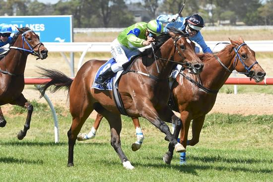 Essence Of Terror makes it two in a row at Werribee