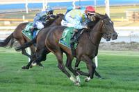 Easy for Creativity at Cranbourne