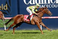 Sword out to Light up Adelaide in Oaks