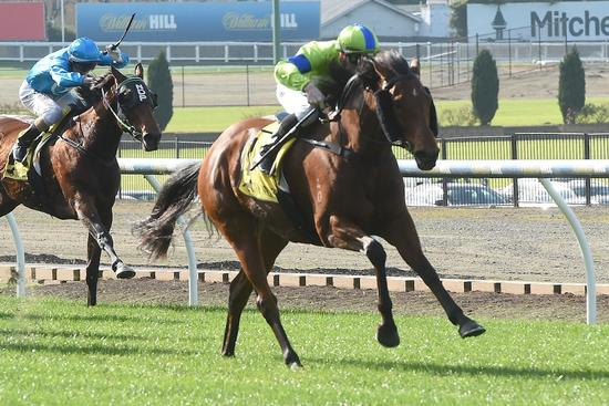 Baby Whistles again back at Moonee Valley