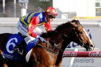 Odeon shows Zacinto quality again at Caulfield