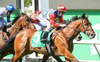 Gold rocks Cranbourne in Apache Cat Classic