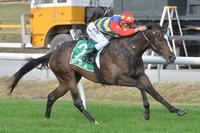 Ellerton Zahra's Cup week show rolls on to Cranbourne