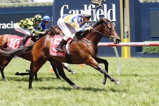 We're looking forward to a big February at Caulfield
