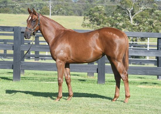 Pre yearling sale