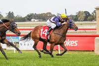 Blinkers set Atomic on the Charge at Sale