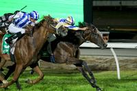 Two chances for back-to-back Mornington Guineas wins on Saturday