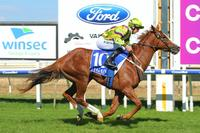 Impeccably-bred Crystal sprouts Wings at Wangaratta
