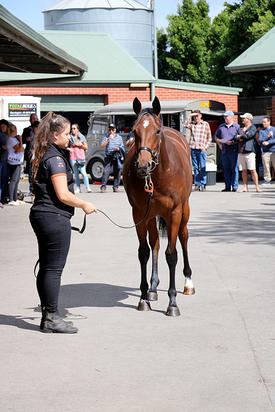 Yearling parade