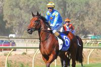 Marcel marvellous in Benalla debut victory