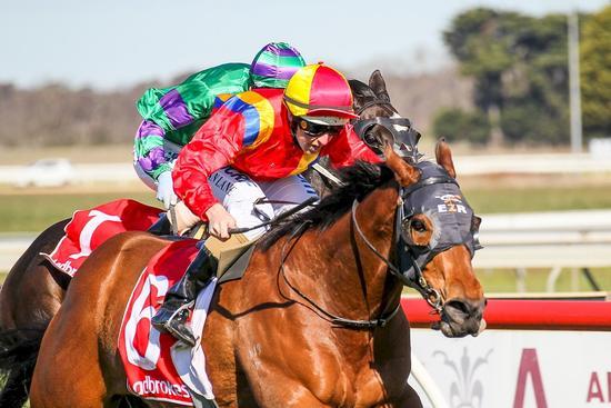 Sale winner a smart galloper for sure
