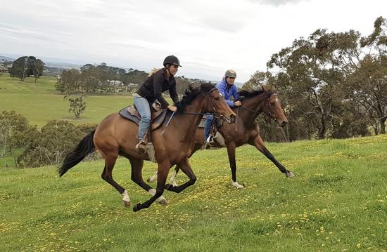 Pretraining at Wingara Thoroughbreds