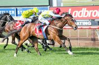Exceltara storms to first-up win at Mornington