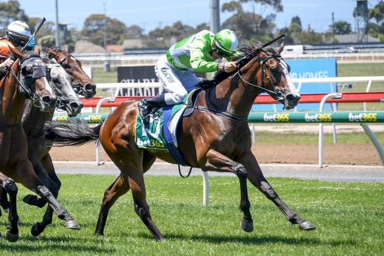 Serious fillies in Geelong Boxing Day quinella