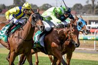 Roxanne's light shines first-up at Geelong