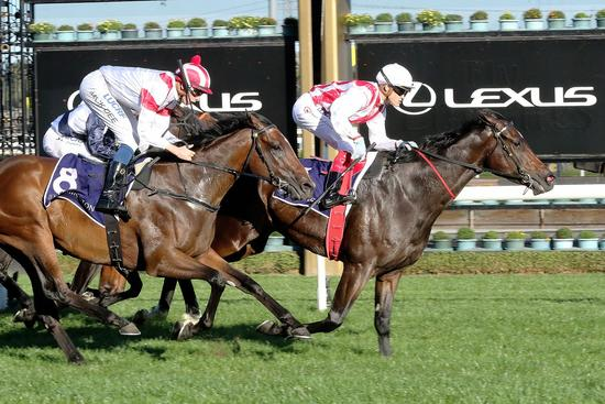 New and improved Zoutori powers to Anzac Day win at Flemington