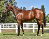 Two Young Horses Acquired at 2018 Inglis Classic Sale