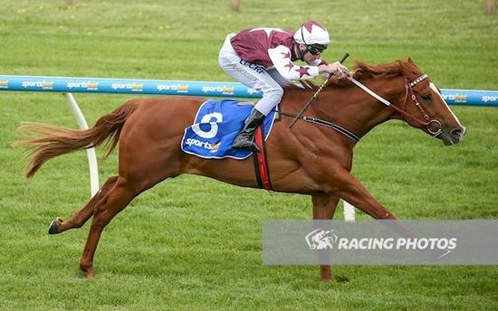 Red Choux's Winning 12Oct2017 Ballarat.JPG
