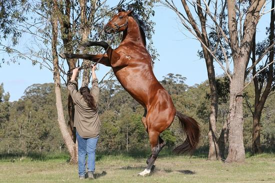 Royal Ace_09-07-2020_GEN_Glen Eden Stud__117[10055].jpg