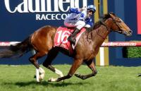Harlow Gold on Guineas and Oaks Dream