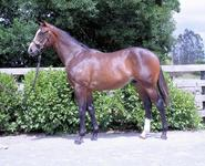 Yearling Feature - TAVISTOCK x LADY FASHION COLT