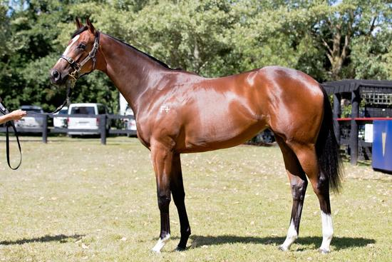 NZ Premier Yearling Sale - Video wrap up with 'Moods'
