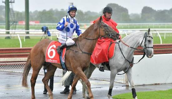 Wet weather Wonderland at Ladbrokes Park