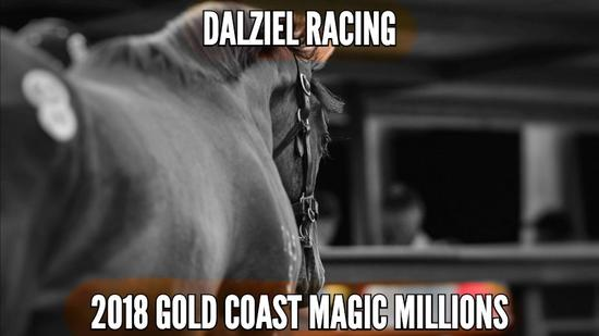 2018 MAGIC MILLIONS VIDEO - EXPRESSIONS OF INTEREST