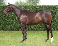 Beautifully bred VOBIS Filly by STREET BOSS, son of lynchpin sire - STREET CRY