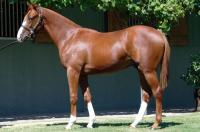 By triple Group 1 winner and son of Champion sire of 2YO's Exceed And Excel - HELMET