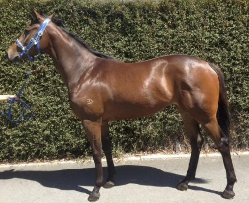 LEASE - Impressive filly by son of Fastnet Rock - Therock - Trained by Robert Smerdon
