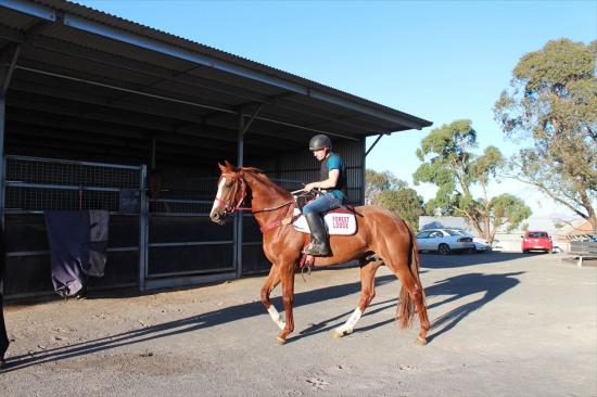 Cracking HUSSON Colt trained by man of the moment - Darren Weir - only 20% Remaining!