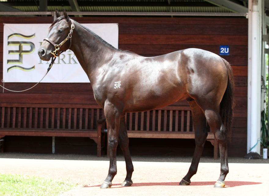 This colt is one of the last progeny of son of DANEHILL - COMMANDS