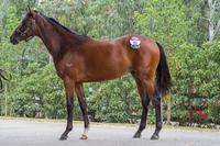 Melbourne Premier DUNDEEL Colt - 5% shares $3495