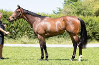 Group Winning Quality in this 2YO Filly by REDWOOD