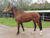 ​Strong filly by the late Champion Victorian First Season sire FIGHTING SUN - FOR LEASE