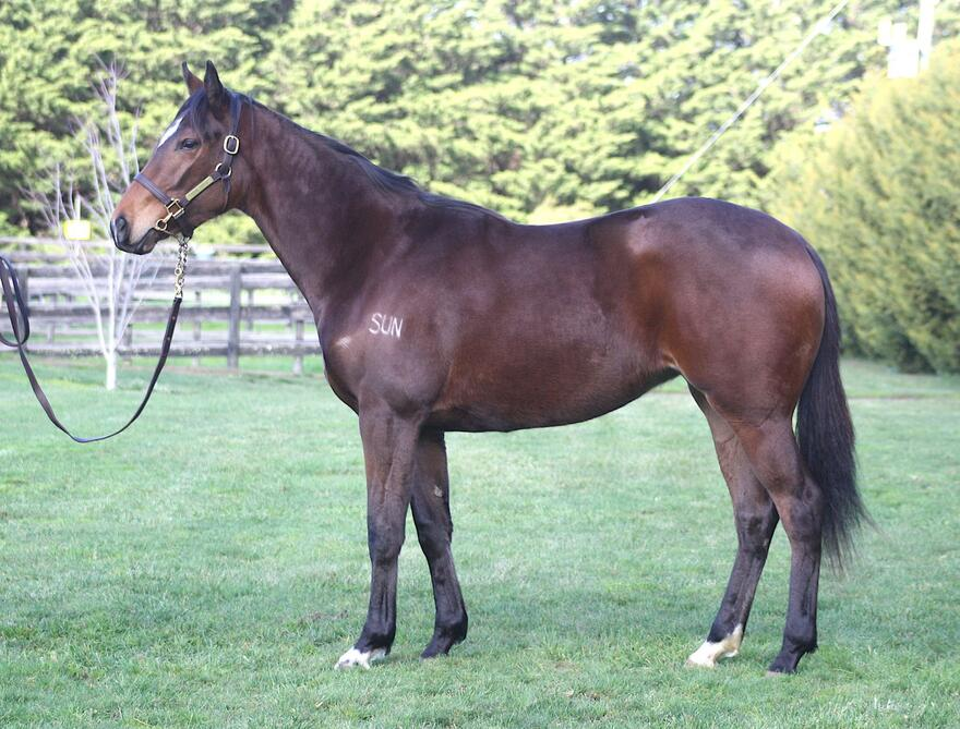 ​Strong filly by First Season Sun Stud Stallion PALENTINO