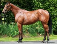 Exceed & Excel's highest winning cross are Zabeel mares