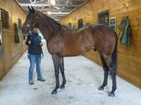 Australasian Thoroughbreds ZABEEL COLT Arrives